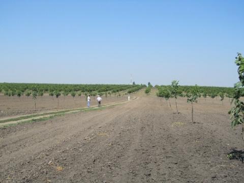 В Дагестане перевыполнили план по закладке новых садов