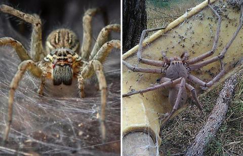 Популяция пауков способна ун…
