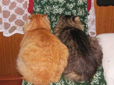 отвернувшиеся коты