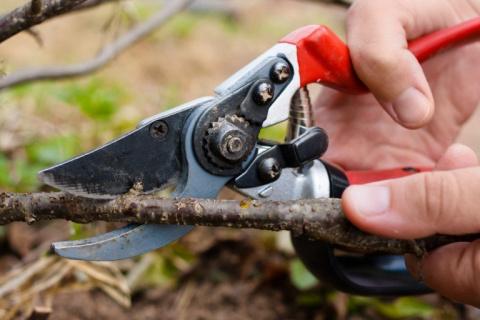 Какие растения нужно обрезат…