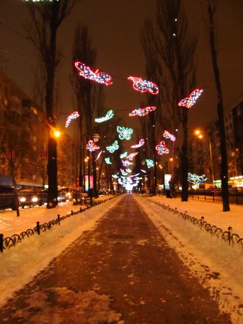 бабочки в вечернем Киеве