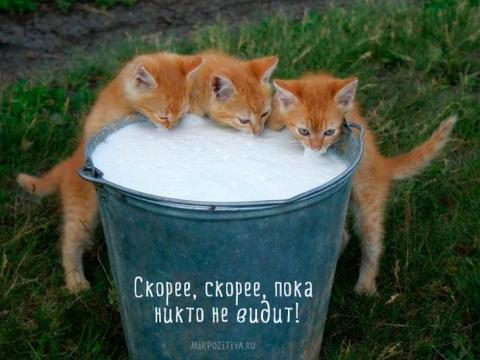 Самые смешные кошки: лучшая …