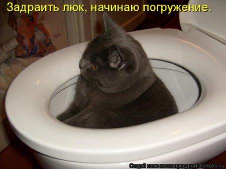 Субботняя котомашка