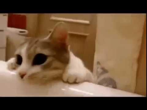 Этот котик так сильно боится…