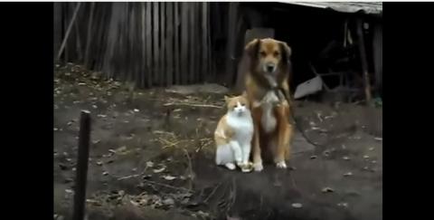 Кот и собака позировали хозя…