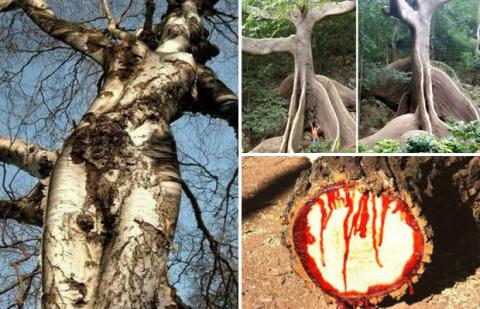 Самые необычные деревья: природа всегда удивляет нас