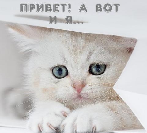 Котенок Петр Ильич!