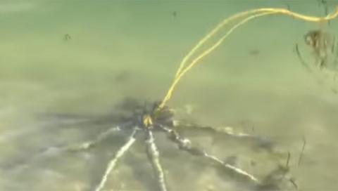 У берегов Род-Айленда нашли загадочного «робота» с металлическими «ногами»
