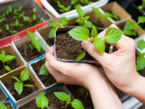 Заготавливаем грунтосмеси для выращивания рассады