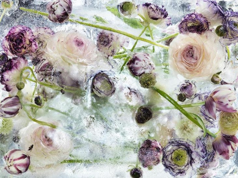Замороженные цветы от Кэндзи Сибата