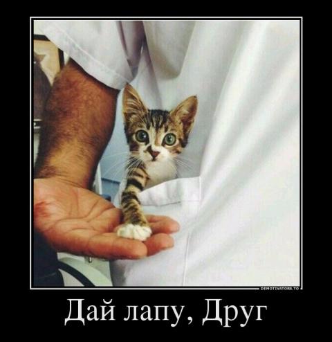 Коты, кошки и котята в новой…