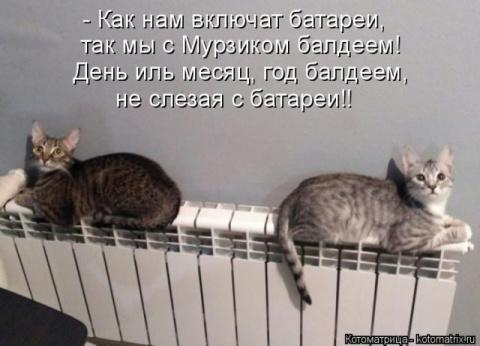 Смешные котоматрицы)