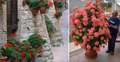 Нашла растения, что цветут в…