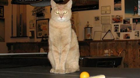 Знаменитый кот-мэр из Аляски…