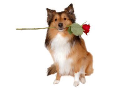 Пропала собака - нашедшему царство небесное.