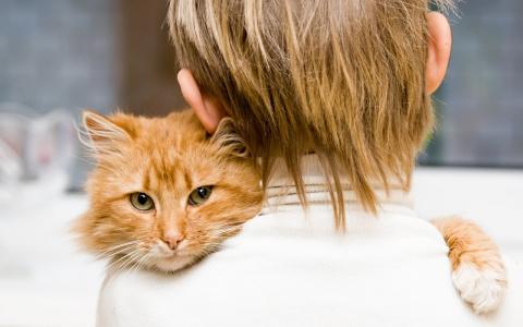 Как кошки встречают своих хо…