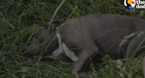 Собака, которой выстрелили в…