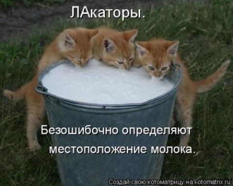 Воскресный переполох: котоматрица