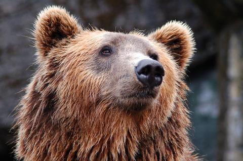 Акция в зоопарке: собрав 9 билетов, десятый получите в подарок