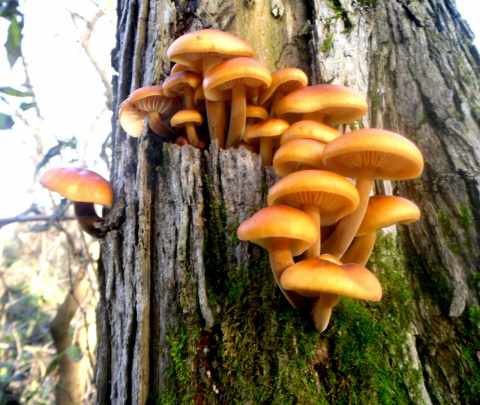 За грибами в ноябре.