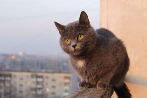 Синдром падения с высоты у кошек