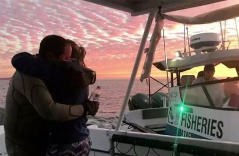 Акула у берегов Австралии ус…