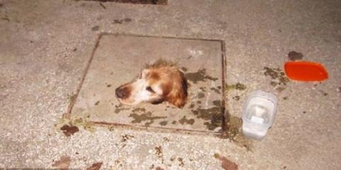 История спасения собаки, поп…