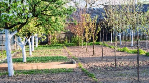 Как правильно посадить дерев…