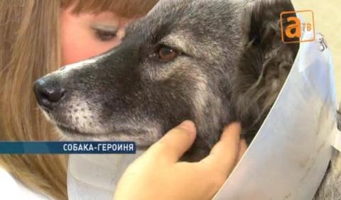 Собака спасла хозяйку от пули злого соседа