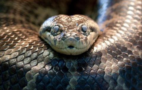 «Петля анаконды»: третье сжатие?