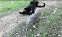 Дружба кота и совы