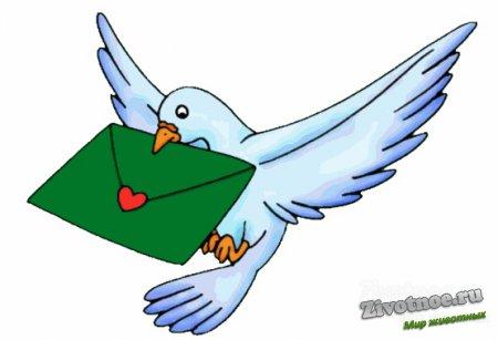 Рисунок почтовых голубей