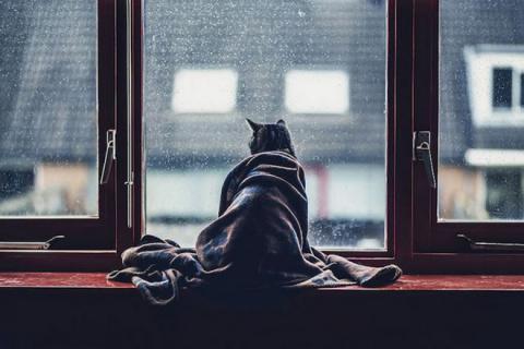 Если дома ждёт кот, это знач…