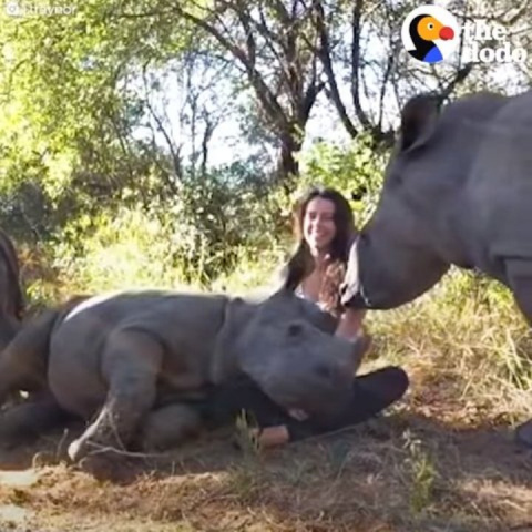Малыш носорога потерял маму,…