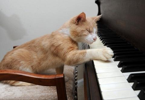 Как жить слепым котам