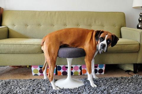 30 кошек и собак, проигравших битву с мебелью