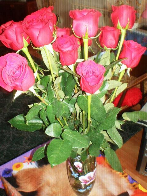 Розы фото дома