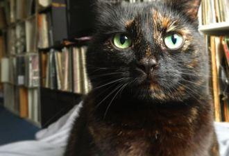 Кошка каждое утро приносит хозяину лист с улицы. Зачем?