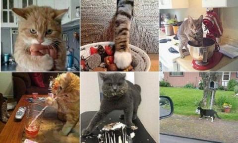 Кошки-воришки