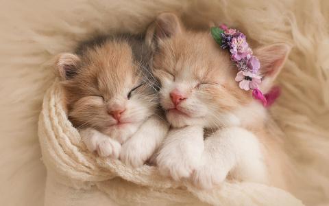 Милые красивые котята!