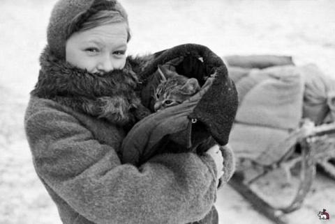 Как коты в войну служили (4 фото)
