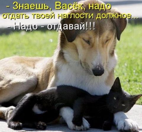 Приколюшки из животного мира)