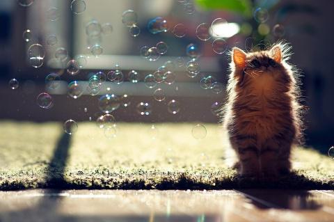 Милые фотографии животных