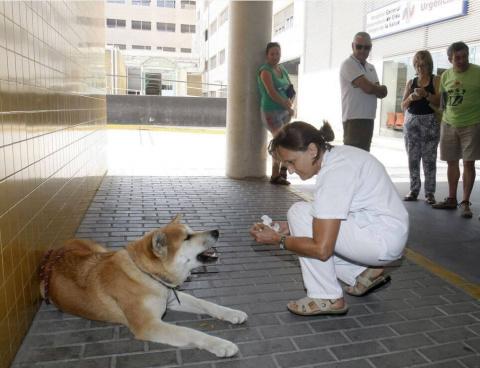 К дверям больницы подошла собака. Каково же было удивление медперсонала, когда они узнали причину
