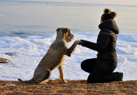 Прекрасная дружба