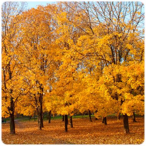 Осень...осень...