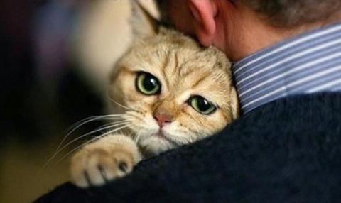 Забавные фото наших кошачьих друзей