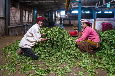 Экскурсия на завод чая в Инд…
