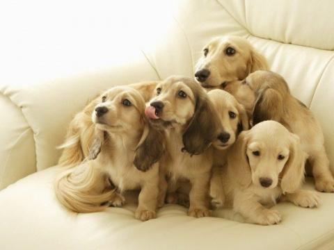 Очаровательные собачки и их …