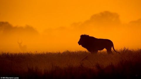 Дикие животные Африки в золотистых лучах заката и рассвета